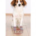 Zentonil Advance para problemas hepaticos en perros y gatos