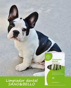 Limpiador dental para perros Sano&Bello Bayer Higiene bucal