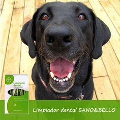 Limpiador dental para perros Sano&Bello Bayer Higiene dental